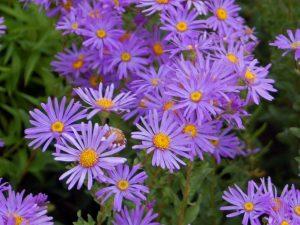 Aster diy bouquet wedding flower floral