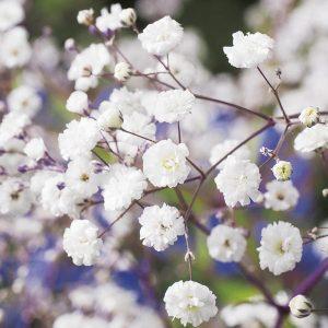Baby's breathe diy bouquet wedding flower floral