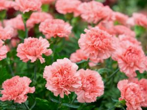 Carnation diy bouquet wedding flower floral