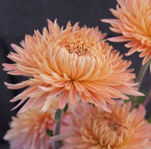 Chrysanthemum diy bouquet wedding flower floral