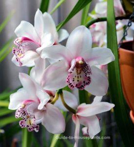Cymbidium Orchid diy bouquet wedding flower floral