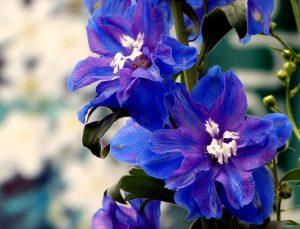 Delphinium diy bouquet wedding flower floral