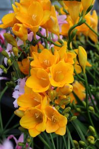 Freesia diy bouquet wedding flower floral