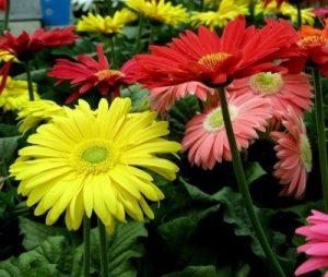Gerbera diy bouquet wedding flower floral