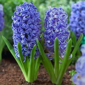 Hyacinth diy bouquet wedding flower floral