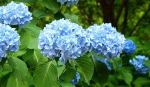 Hydrangea diy bouquet wedding flower floral