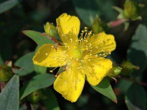 Hypericum diy bouquet wedding flower floral