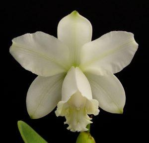 Japhet Orchid diy bouquet wedding floral flower