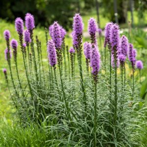 Liatris diy bouquet wedding flower floral