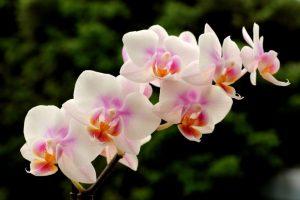 Orchid diy bouquet wedding flower floral