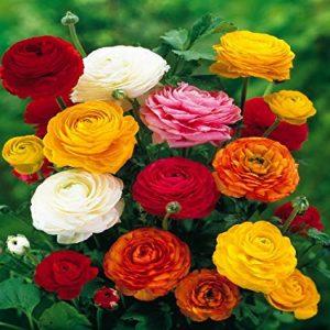 Ranunculus diy bouquet wedding flowers