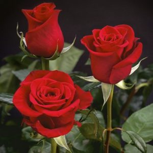 Rose diy bouquet wedding flower floral