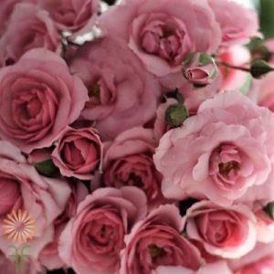 Rose Spray diy bouquet wedding flowers floral