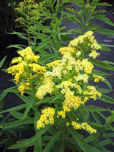 Solidaster diy bouquet wedding flower floral