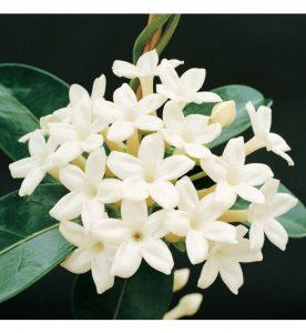 Stephanotis diy bouquet wedding flower floral