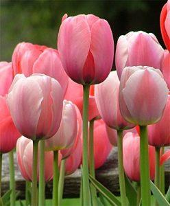 Tulip diy bouquet wedding flower floral
